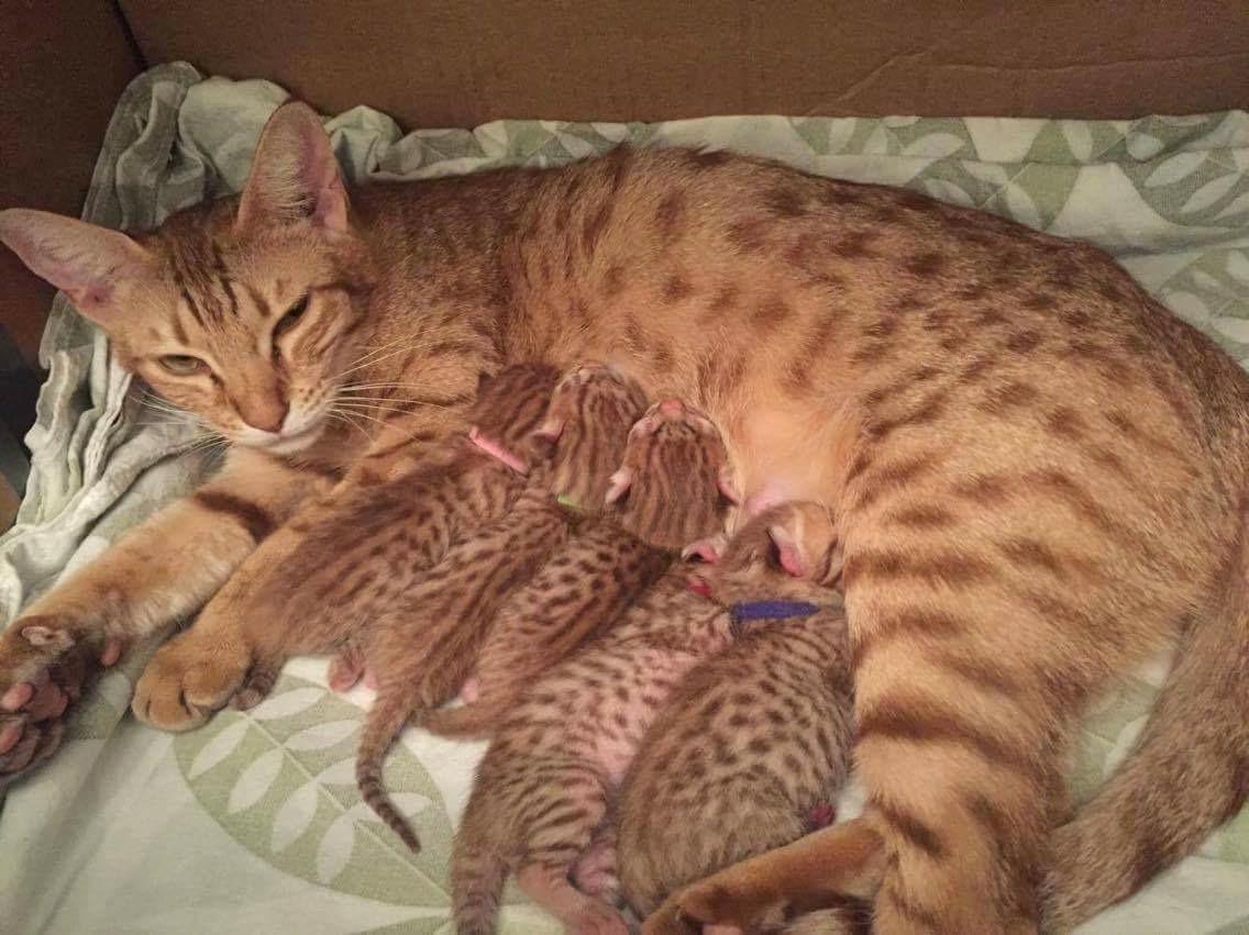 Med kattungene